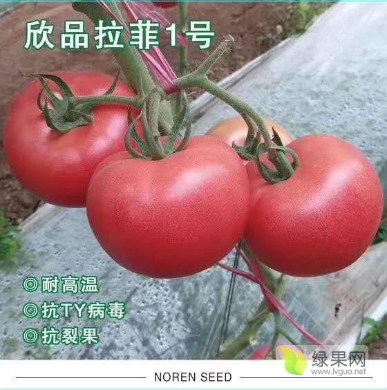越夏耐熱耐裂大果番茄-拉菲1號