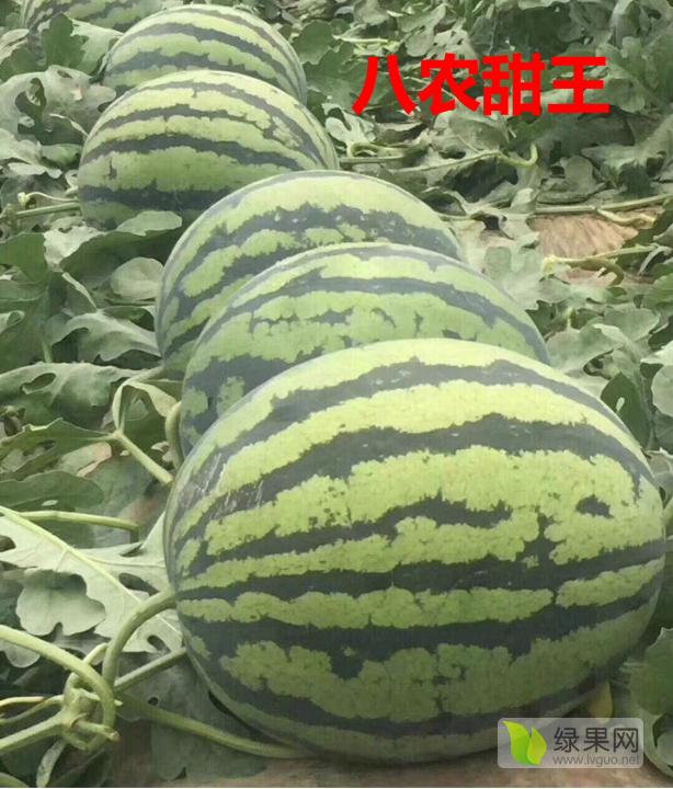 双红金5西瓜种子批发电话_双红金五西瓜种子品种