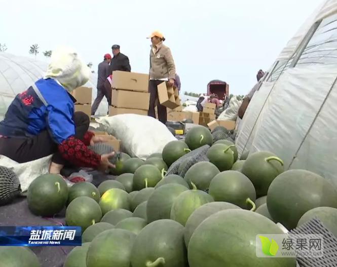 """东台西瓜""""王炸""""开市 瓜农收益亩超万元"""