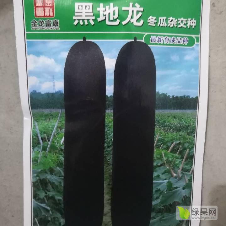 各类蔬菜种子在售 找代理商
