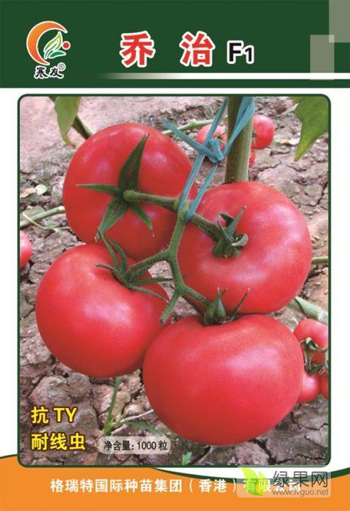 大果四季都可種植硬粉番茄
