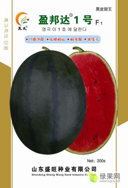 盈邦達1號 甜王新品種 黑皮甜王早熟 大紅瓤