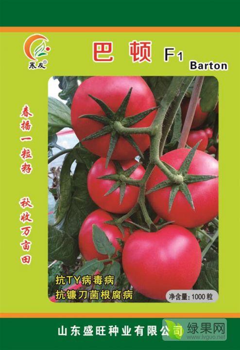 巴頓 抗死棵 耐寒番茄品種