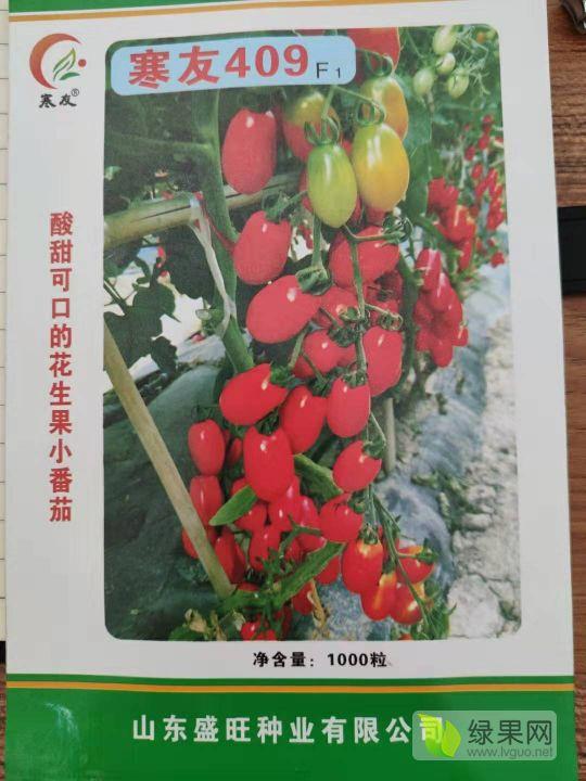 紅色花生果小番茄-寒友409
