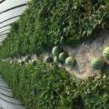 正宗麒麟西瓜,瓜大。本人每一批约有5万斤。