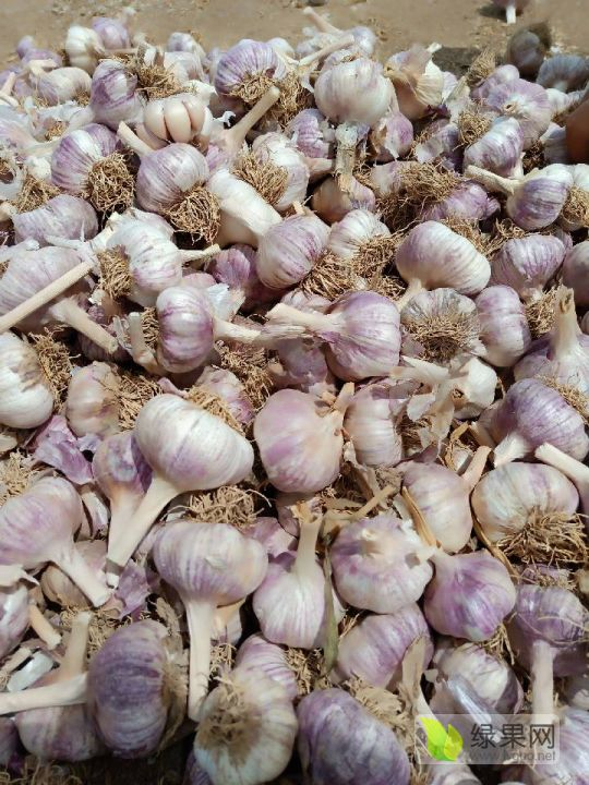 大名優質蒜種,蒜黃料,蒜米,脫水蒜等等