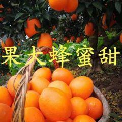 湖北橙子秭归脐橙纽荷尔脐橙中华红橙伦晚脐橙13886725378出售
