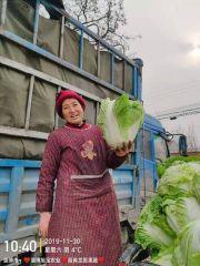 ❤️❤️精选❤️❤️万亩大头白菜3-10斤产地直销区直发全国