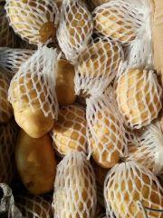 特价销售优质荷兰十五土豆