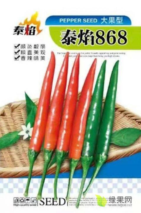 供应大果艳红辣椒太艳868