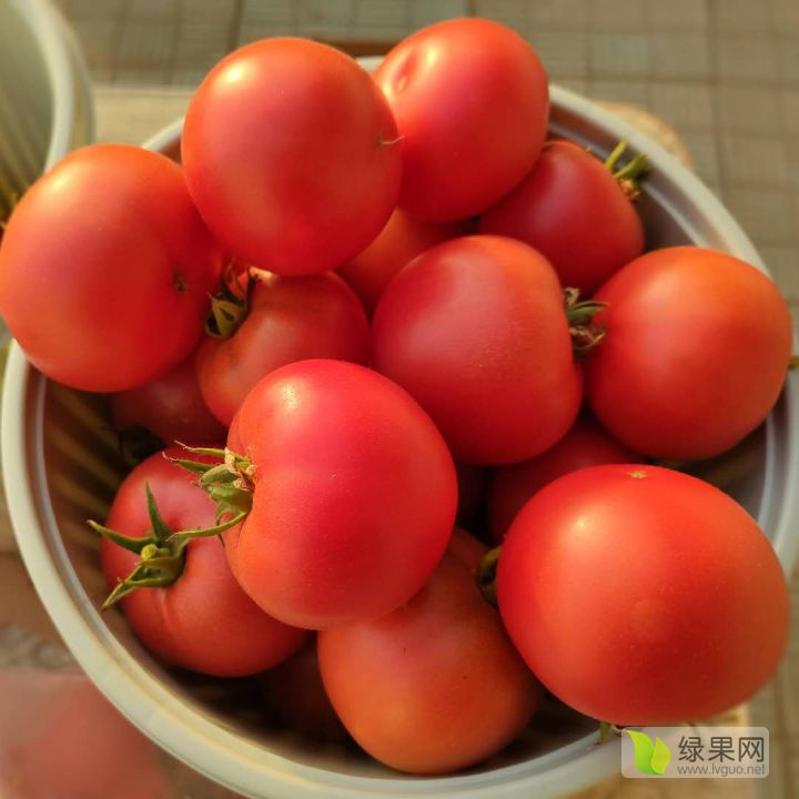 戴安娜口感西红柿种子