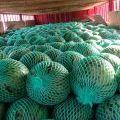 惠州东景农贸市场甜王西瓜 热烈欢迎采购商前来采购