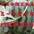 甜王精品沙土西瓜老尤老字号