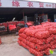 预售黄皮洋葱红叶三号品种葱专供边贸出口保鲜