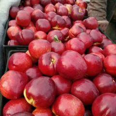 万亩各种油桃,毛桃直销产地