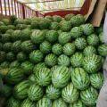 汉川中洲农场麦茬丰抗88成熟,明天可以出货。