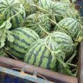 东明西瓜,上市了,质量上乘价格低