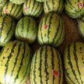 宁夏硒砂瓜大量供应,瓤红且酥,汁多且甜