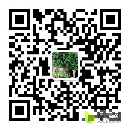 mmqrcode1599263579778.png