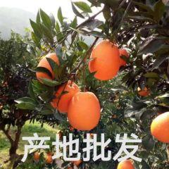 湖北秭归脐橙代办/全年供应批发秭归脐橙