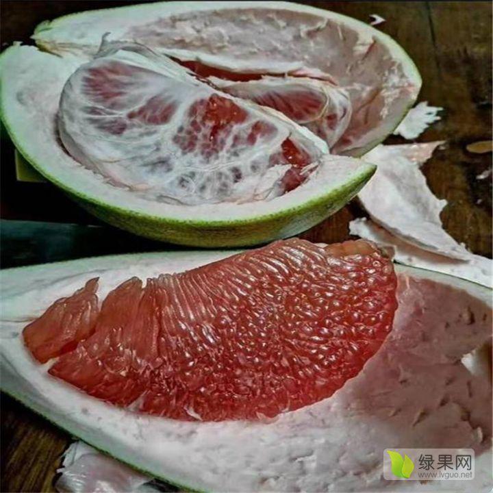泰国红宝石青柚苗-正宗泰国青皮红宝石柚苗苗圃