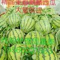 夏邑县冠龙西瓜大量供应