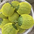 特小凤西瓜大量上市,每天可供应10万斤