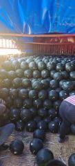 陕西黑无籽西瓜大量上市,黑无籽西瓜价格
