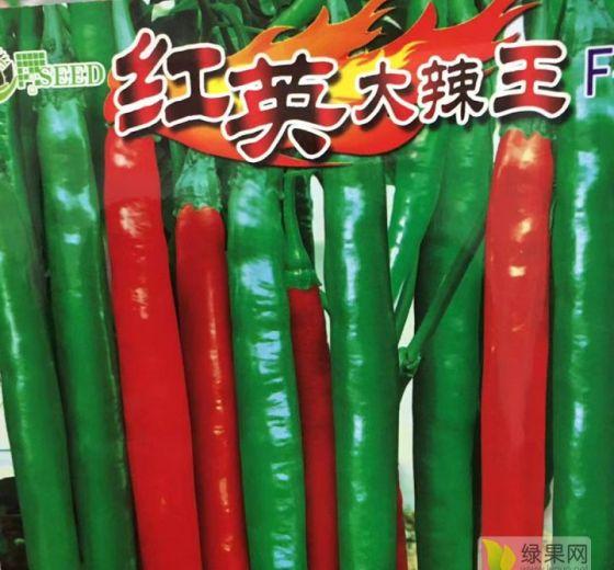 红英辣椒价格