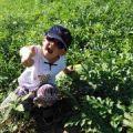 内蒙古翁牛特旗2500亩西瓜8月20日开园啦
