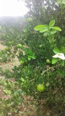 """2016衢州的亚博胡柚就是""""贵"""""""