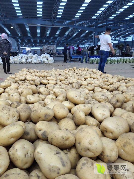 昌黎土豆大量上市