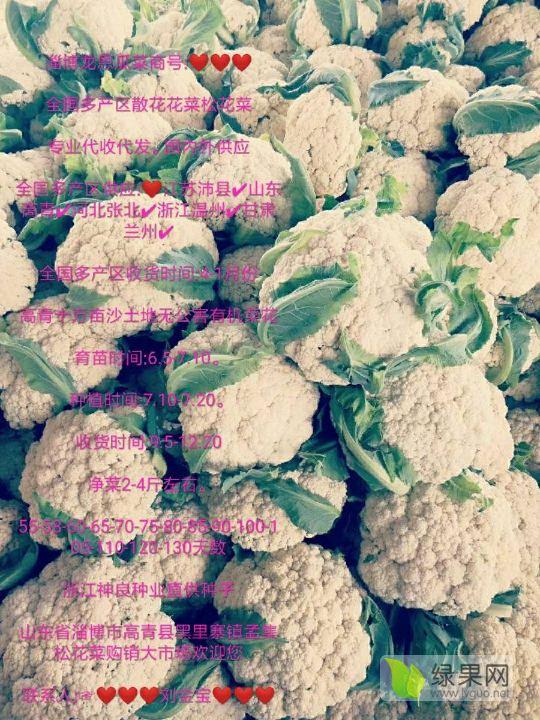 ❤【刘金宝】❤【沙土地产区】❤散花花菜松花菜2-4斤净菜万亩产区